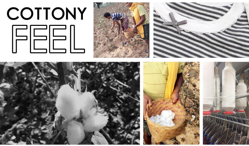 綿花収穫のようす